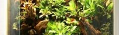Aqua-terrarium - Richard Ceelen
